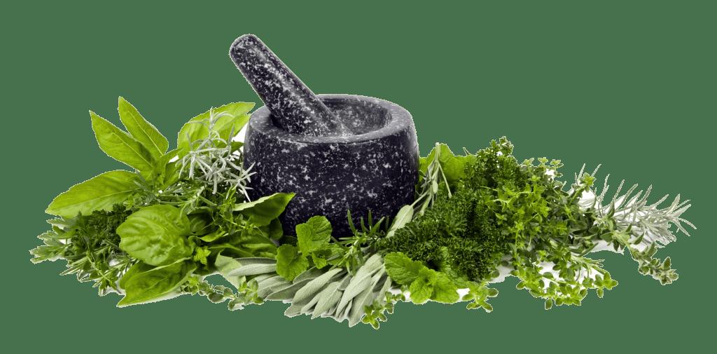Rośliny wspomagające naturalne oczyszczenie organizmu