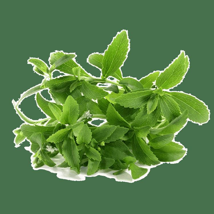 roślinny skład